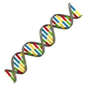 DNA(7)
